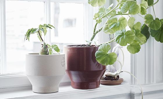 Pick your pot